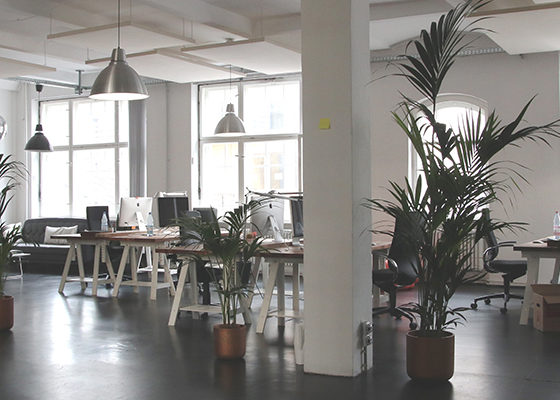 Bright, modern white workspace with sawhorse tables and imac computers and some potted palms